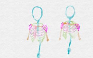 大胸筋と三角筋が足された状態