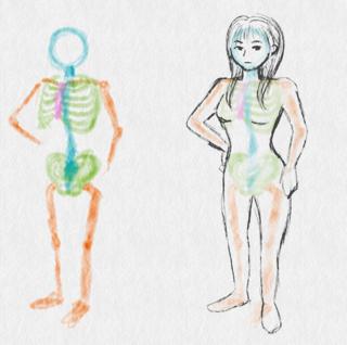 背骨が長い骨格